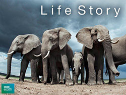 Life Story David Attenborough