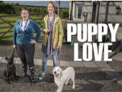 Puppy Love on Hulu