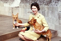 The Queen's Favourite Animals